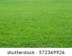 pattern of green grass field... | Shutterstock . vector #572369926