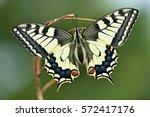 butterfly | Shutterstock . vector #572417176