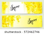 yellow mimosa spring flowers...   Shutterstock .eps vector #572462746