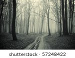 Path Through A Forest With...
