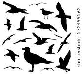 seagull silhouette set isolated ... | Shutterstock .eps vector #572499562
