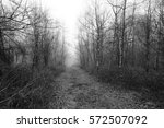 english woodland on a foggy... | Shutterstock . vector #572507092