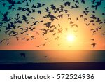 silhouettes flock of seagulls... | Shutterstock . vector #572524936
