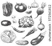 vector hand drawn illustration... | Shutterstock .eps vector #572561812
