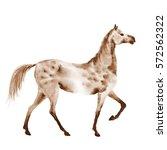 sepia watercolor dapple grey... | Shutterstock . vector #572562322
