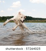 Dog Jumping In The Water....