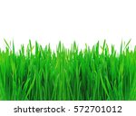 green spring grass isolated on... | Shutterstock . vector #572701012