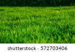 green grass natural background... | Shutterstock . vector #572703406
