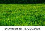 green grass natural background... | Shutterstock . vector #572703406