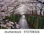 tunnel of cherry blossoms above ...   Shutterstock . vector #572708326
