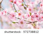 beautiful spring background ... | Shutterstock . vector #572738812