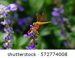 golden dragonfly   Shutterstock . vector #572774008