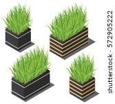isometric plant in modern pot... | Shutterstock .eps vector #572905222