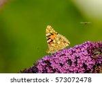 Butterfly At Purple Flower