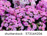 Small photo of Pink adagio roses in flower garden