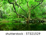 tree and water in jungle | Shutterstock . vector #57321529