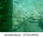 Small photo of A school of French Grunts (Haemulon flavolineatum) hiding behind a pier in Cozumel, Mexico.