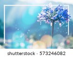 background nature flower.... | Shutterstock . vector #573246082