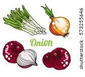 vector set of orange green and... | Shutterstock .eps vector #573255646