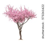 Stock photo blossoming pink sacura tree isolated on white background 573261622
