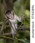 baby monkey in forest Ubud bali - stock photo