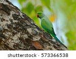 Green Bird Sitting On Tree...
