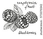 blackberries  raspberries  set ... | Shutterstock .eps vector #573370342