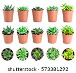 Set Of Pot Plant Echeveria And...