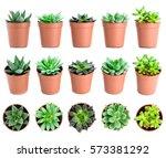 set of pot plant echeveria and... | Shutterstock . vector #573381292