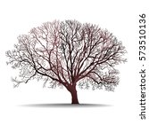 leafless tree isolated vector... | Shutterstock .eps vector #573510136