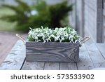 spring flowers snowdrops in...   Shutterstock . vector #573533902