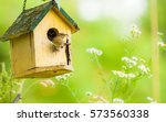 The House Wren.  A Tiny House...