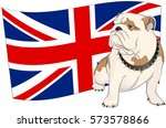English Bulldog On A Backgroun...
