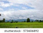 Rice Seedlings Field In Front ...