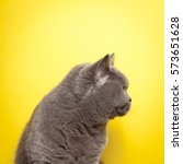 Side Profile Of A Grey Cat With ...
