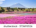 mountain fuji and pink moss...   Shutterstock . vector #573693526