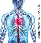 3d illustration of heart   part ... | Shutterstock . vector #573720946