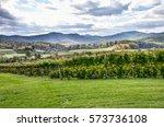 Autumn Vineyard Hills During In ...