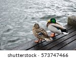 Mallard Ducks At The Lake In...