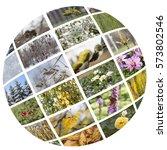 Four Seasons Round Collage....