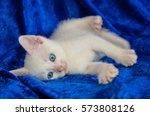 Stock photo white kitten 573808126