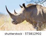 isolated rhinoceros from... | Shutterstock . vector #573812902