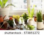 gardening at home | Shutterstock . vector #573851272
