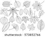 tree leaves set silhouettes... | Shutterstock .eps vector #573852766