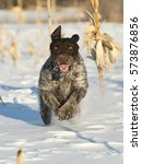 A Hunting Dog Running In The...