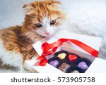 Stock photo cute fluffy red cat box of chocolates 573905758