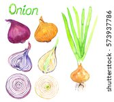 green onion plant  onion... | Shutterstock . vector #573937786