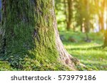 stump with moss in autumn... | Shutterstock . vector #573979186