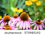 Bumblebees Sitting On Colorful...