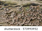 A Colorful Fungus Colony On A...